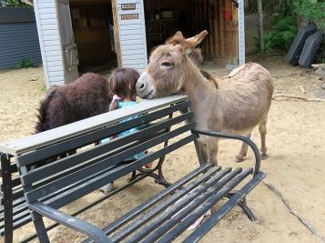 Kyla's Donkey Salon