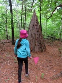 Wood cones ... ?