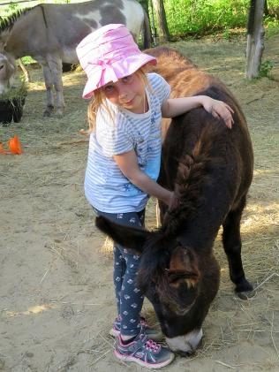 Lexi - Bella's grooming buddy.