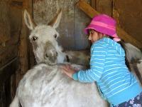 Hello donkeys ... I'm the junior donkey whisperer.