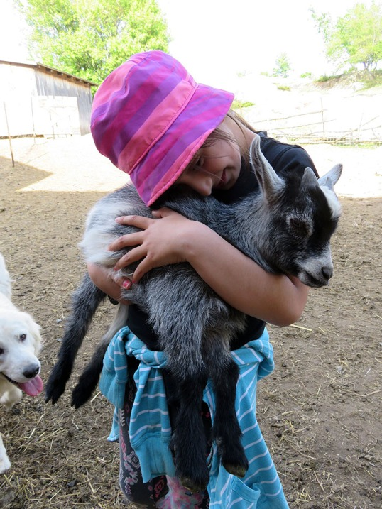 Awww ... goats are cuddly.