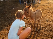Kate and Haddy - cutest baby donkey ever!
