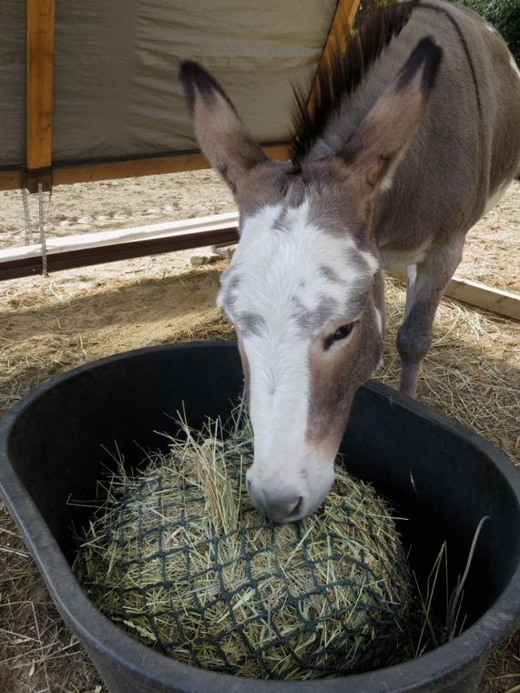 New hay! Soft enough for hay bags.