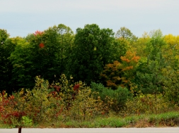 Here comes the fall colour.