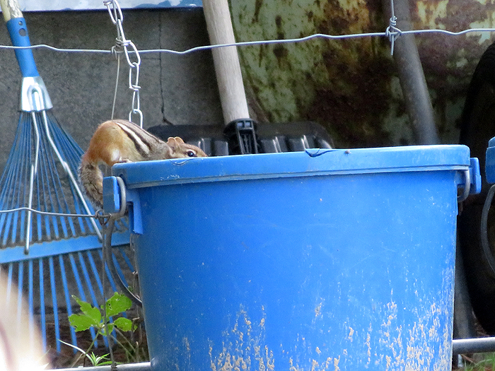 You know ... it is a LONG way up for a chippy to get to the top of this bucket...