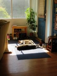 Rufus and Teddy sunbathing ...