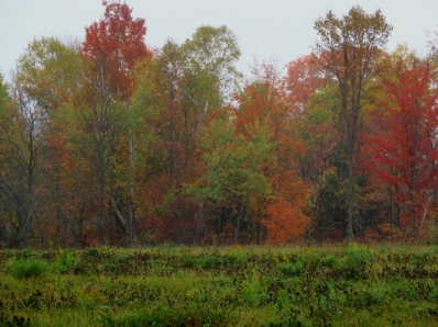 Blazing woods line.