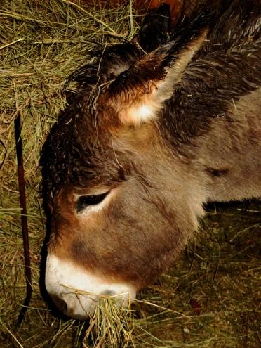 So wet donkeys would stay inside!