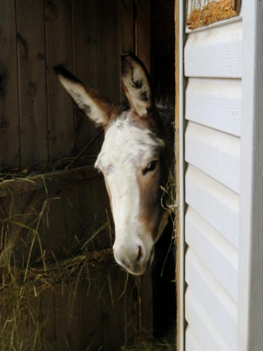 Bella - come back in here.