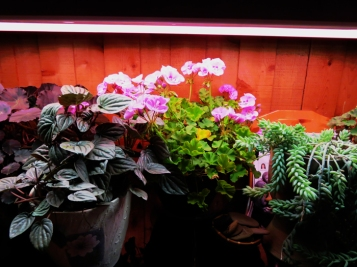 The light table garden