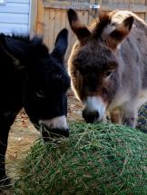 Tasty hay bag for breakfast