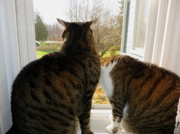 They could smell the open window two rooms away.