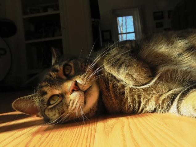 Teddy prefers sunshine