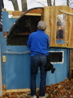 Ede put up a screen so the top of the coop can be open to the fresh air.