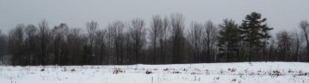 Misty back field