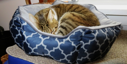Rufus's curl up bed