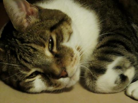 Rufus is feeling much better.