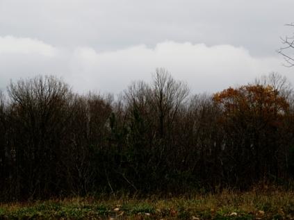 november-30001