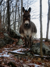 Nimble as a mountain goat