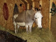 Queen of the hay hill