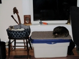 The space on Teddy's bed is there because at first Oz thought they'd share.