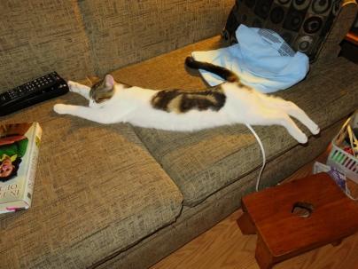 Oz is one LONG kitten!