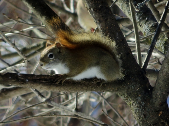 Meanwhile this little guy was upset that yet MORE birds were taking over HIS tree!