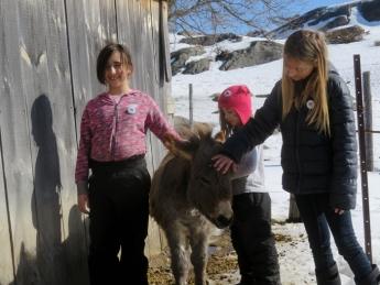 Hanny, the donkey, was born last summer.