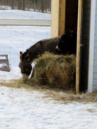 If the hay barn is too crowded ... just push that bale out of there.