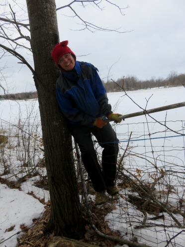 The lumberjill ... We had to pull the tree back that fell over the fence line.