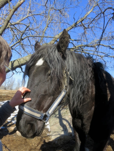 A lovely horse with HUGE hooves! She loves scratches ... just like the rest of us!