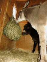 The best solution for a really cold night --- LOTS of hay!