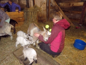Although Sandy was so mellow tonight she was just relaxing while the boys got their feeding.