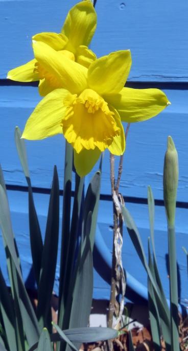 Welcome spring sunshine!
