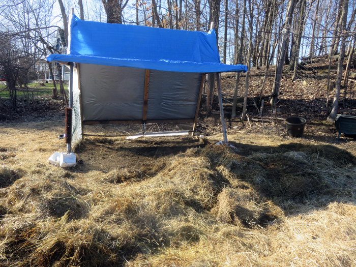 Got the winter hay bed all forked out from under the shelter. As each layer melts and dries I fork it into the Bully ... and then fork it into the manure bin. See - donkeys are a great fitness program.
