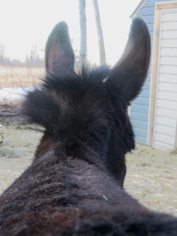 Bella's furry winter mane