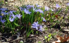 Hello spring flowers!