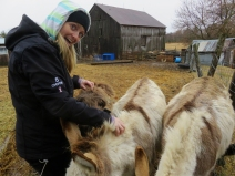 Ashley greets the donkeys