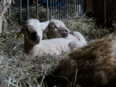 Then I headed down the road to check out the maternity ward at the farm.