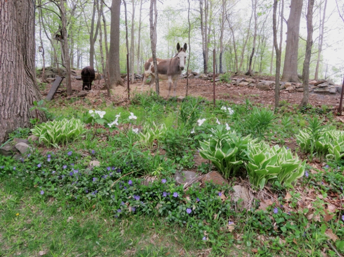 Spring has sprung in the donkey woods.