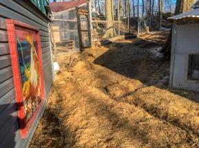 'Critter Village' - everyone's doors meet here - coop, goat fort, tack barn, donkey barns.